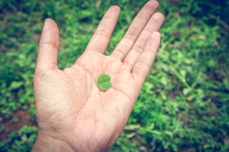 A female hand holds a small green shamrock in the hnadflasche. Stock Photo