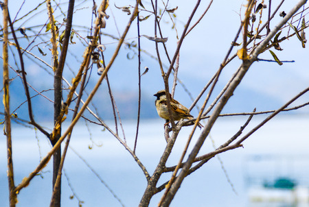 A sparrow sits in the tree and looks forward to the first rays of sunshine at the beginning of spring
