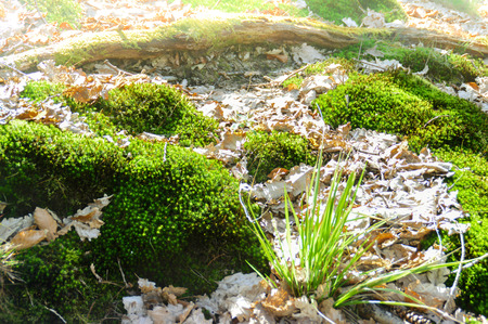 Small nests of fresh green Mossen cover the forest floor Stok Fotoğraf