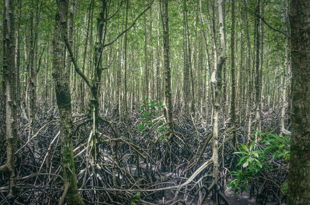 The mangrove forests of koh kong on the border with thailand and cambodia Stok Fotoğraf