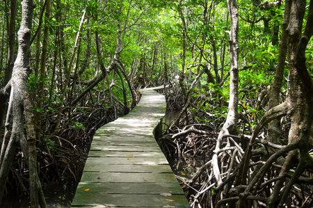 The mangrove forests of koh kong on the border with thailand and cambodia Stock Photo