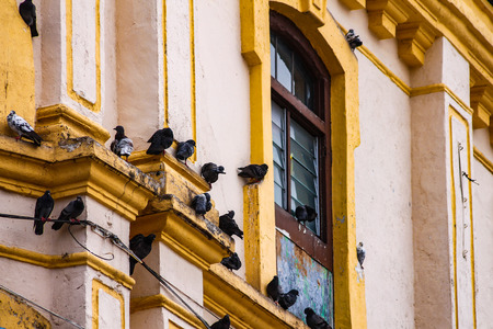 Old, empty buildings are usually besieged by pigeon swarms that only harm the wall of the house