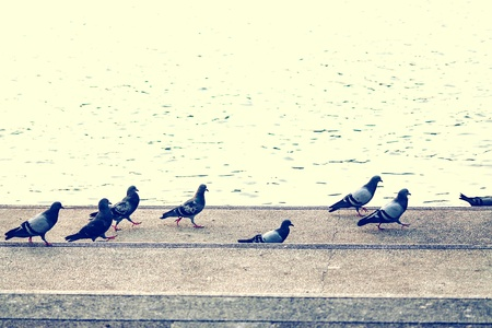 A flock of pigeons on the riverbank in a big city