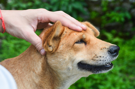 Close-up of a dog getting a head massage and looking as if he is smiling