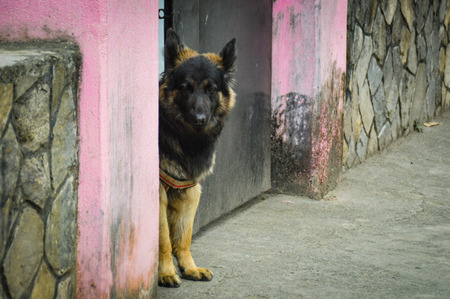 An old shepherd fits exactly who he lets in and who does not