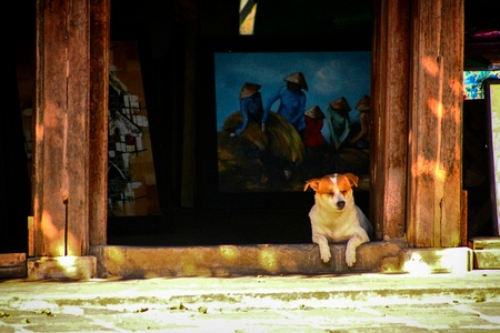The little street dog enjoys the shadow in a gallery