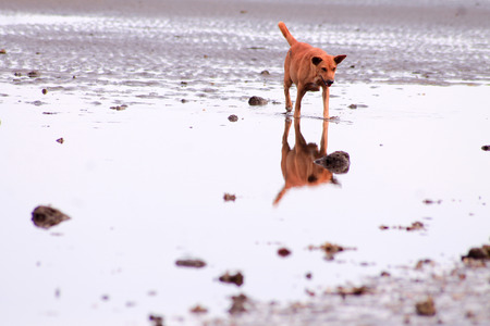 A dog runs along the beach at low tide and is reflected in the remaining water