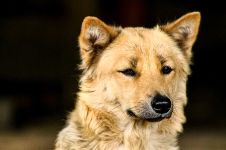 The expression of a dog being exposed to the street Stok Fotoğraf