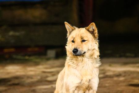 Close-up of a street-living dog hybrid 免版税图像
