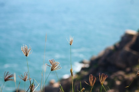 The background view on the blue sea from a cliff. With wild grasses in the foreground
