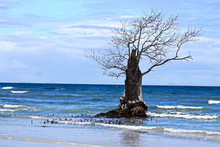 Where mangrove forests once grew, there is only one tree that has escaped deforestation Stok Fotoğraf
