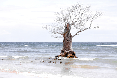 Where mangrove forests once grew, there is only one last tree that has escaped deforestation Stok Fotoğraf