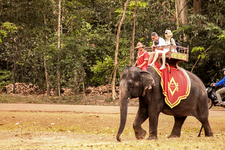 A elephant has had to carry tourists all the way through his life on his back