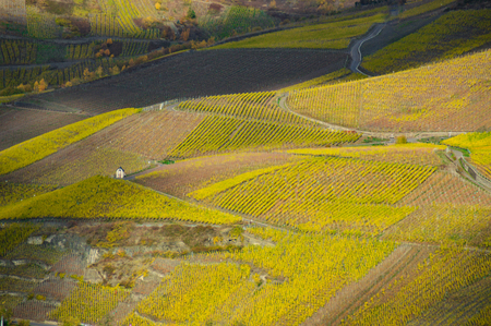 The vineyards of the Mosel valley in Germany