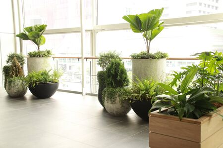 Houseplants decorating a brightly lit balcony to make relaxing and gender neutral home space