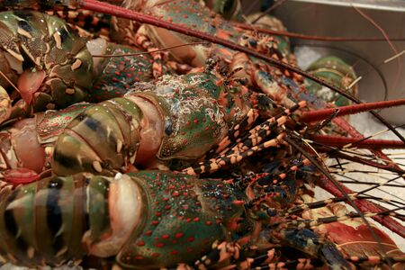Close up of blue lobster on ice in the street market of Yaowarat Road or Chinatown in Bangkok City Thailand