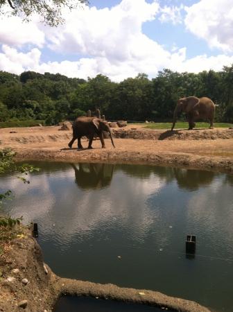 baby elephants  Stok Fotoğraf