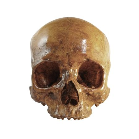 polished: A front picture of an incomplete skull Stock Photo