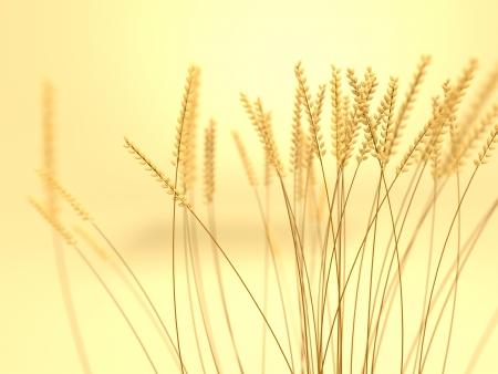 Een weergave van een tarweveld met scherptediepte Stockfoto