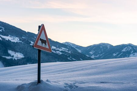 Cow warning traffic sign, winter services. Snow-covered mountains. Austria, Europe