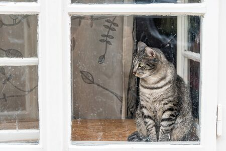 The white, grey and black cat with green eyes sitting behind the white old window with dirty glass.