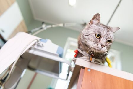 A small, young cat sitting on a table in a veterinary office during medical examinations. In the background, medical apparatus and instruments. Stock fotó