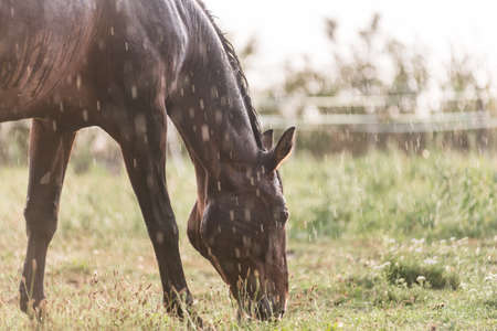 A wet horse with raindrops running down on fur. A horse standing in a green pasture during a downpour rain. Stock fotó