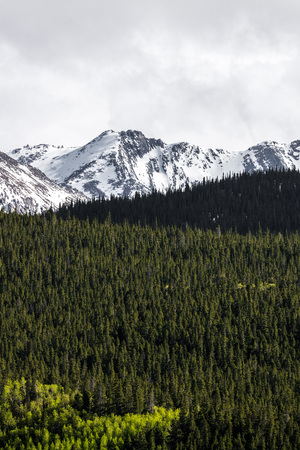 mount evans: nature landscape of mount evans taken in colorado. snow covered mountains .. snow capped mountains and green pine tree forest. Stock Photo
