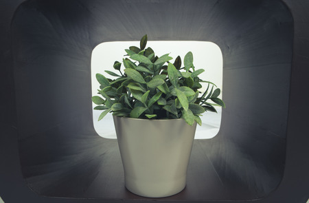 Potted plant in wooden box by the windowsill photo