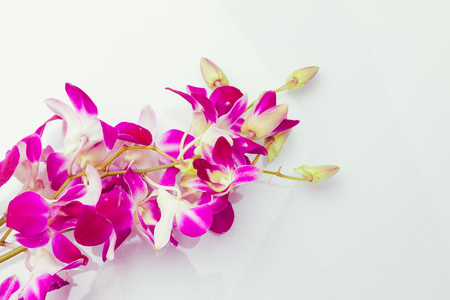purple orchid: Purple orchid thailand isolated on white background with free space at right side for designer