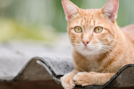 Ginger Cat isolated over green background. Animal portrait. Stock Photo