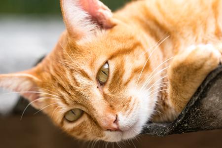 薄茶色の猫は緑の背景に分離。動物の肖像画。