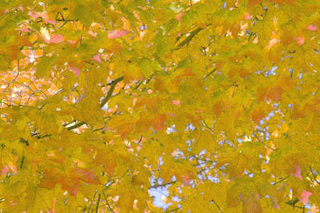 leases: Fall leaves