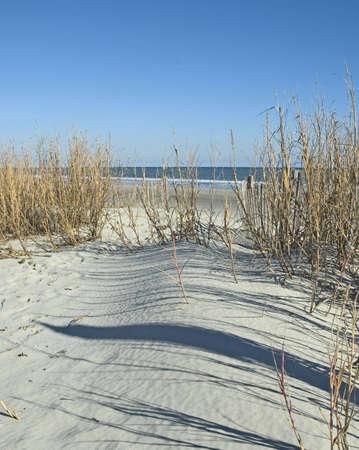 sea oats: Sand, sea oats, and the ocean Stock Photo