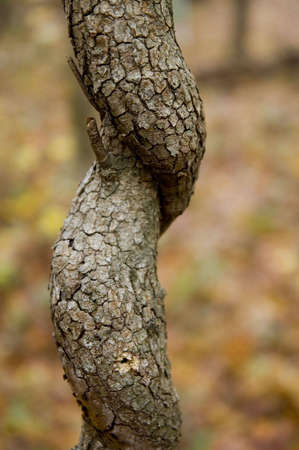 Twisted tree trunk Stock Photo - 2153160