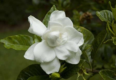White flower bloom Stock fotó