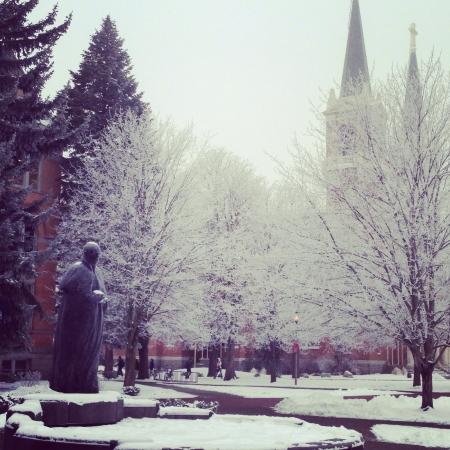 Snowfall on the trees of Gonzaga University