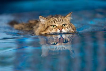 Cat swimming in the Pool