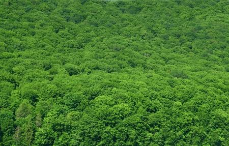 amazon rainforest: luscious rain-forest background Stock Photo