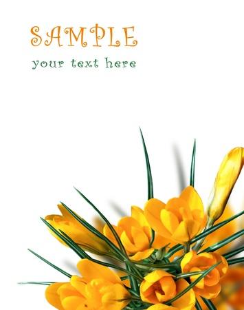 Beautiful Spring Flowers Background Stock Photo