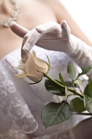 a hand in wedding glove touching tea rose. light from window Stock Photo