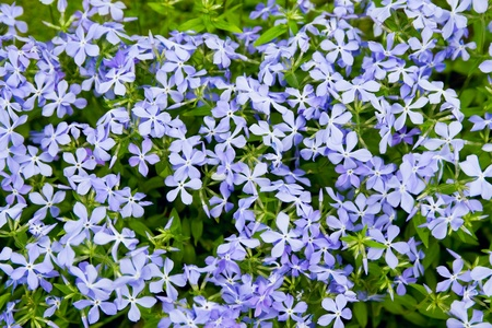 Spring flowers background Stock Photo - 12675725