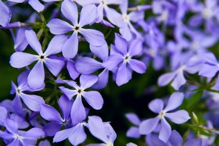 Beautiful Spring flowers background Stock Photo - 12675724