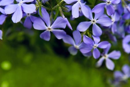 Beautiful Spring flowers background Stock Photo - 12675722