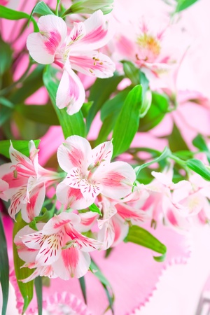 Closeup of pink lily flowers with soft focus. Floral design Stock Photo - 12675728