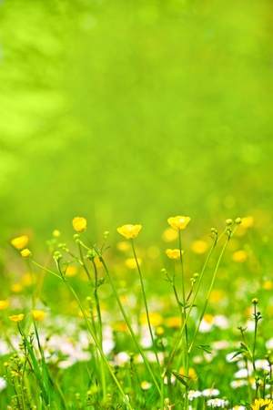 abstract background of spring grass and flowers Stock Photo - 12876957