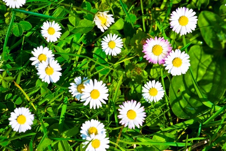 Top view of green grass and  flowers background Stock Photo - 12876955