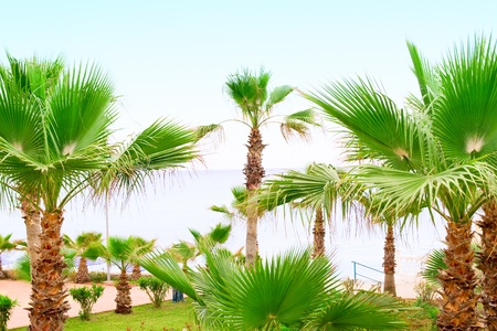 Palm Trees with Blue Sea