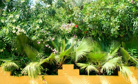 tropical plants and palms Stock Photo - 13768939