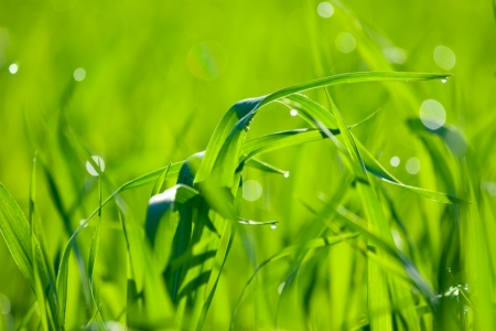 defocus: Natural green background with grass. Soft focus Stock Photo